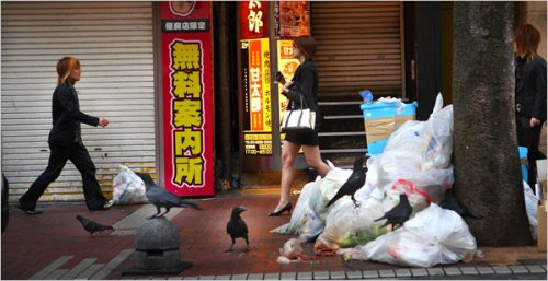 Crows in Tokyo